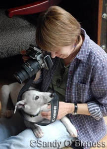 Me and a friend, trying to take a photo of another pup, photo by Sandy O'Bleness