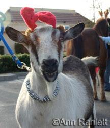 William the goat