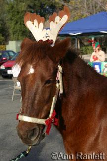 Ruby the pony