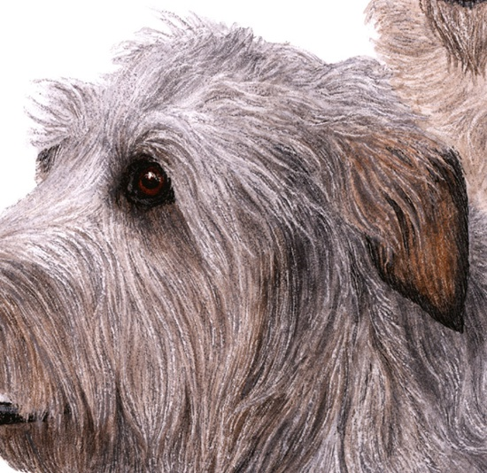 Shaggy Dog Breeds http://annran.blogspot.com/2011/06/big-shaggy-dog