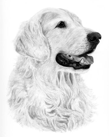 Phase one of Chevy's portrait - inked