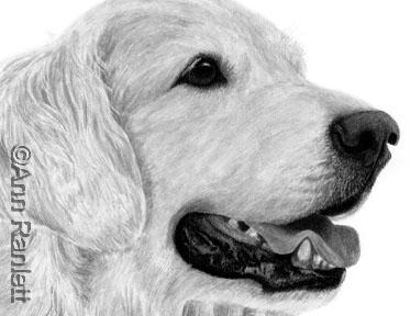 portrait re-inked