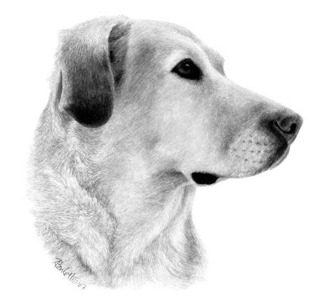 Ink on Scratchboard portrait of Sami, by Ann Ranlett