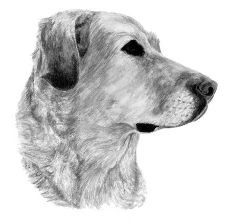 Sami's portrait in progress
