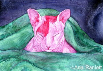 Pink in a Blanket - my painting of the sphynx cat