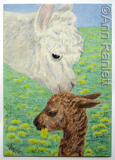 Alpaca Kiss - ACEO by Ann Ranlett