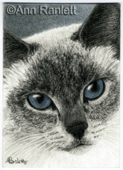 Blue Sky Eyes - pencil & color pencil ACEO by Ann Ranlett