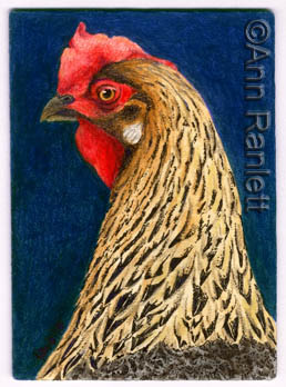 Chicken in Charge - ACEO by Ann Ranlett