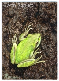 Envy Green - mixed media drawing by Ann Ranlett