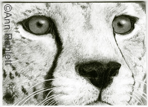 Eyes of Africa, pencil ACEO by Ann Ranlett