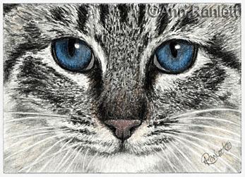 Feline Intensity - ACEO by Ann Ranlett