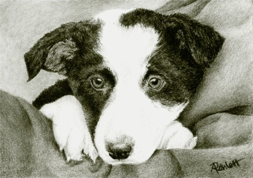 Future Herder - Magpie, pencil drawing by Ann Ranlett