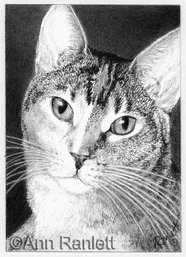 GraphiCat - pencil drawing by Ann Ranlett