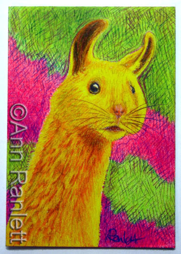 HamLlama - color pencil ACEO by Ann Ranlett, click the image to see the eBay listing