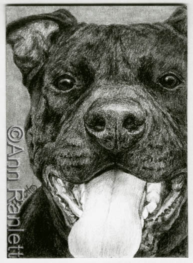 Happy Guy - pencil drawing by Ann Ranlett. Click to see the eBay auction