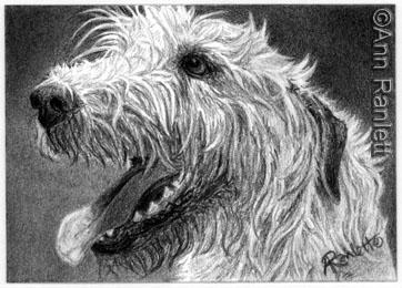 Irish Wolfhound - pencil drawing by Ann Ranlett
