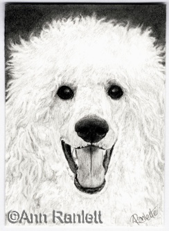 Jolly Boy - graphite pencil ACEO by Ann Ranlett