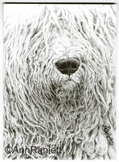 RastaVision - graphite pencil ACEO by Ann Ranlett