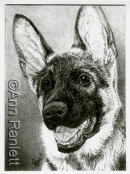 German Shepherd pup - graphite pencil drawing by Ann Ranlett