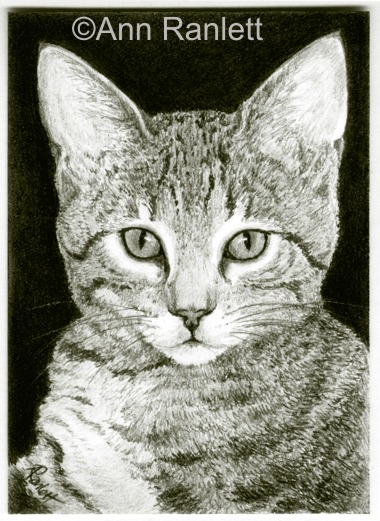 The Look #2 - ACEO pencil drawing of a tabby kitten, by Ann Ranlett