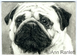 Wrinkles - pencil drawing by Ann Ranlett
