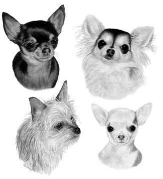 Reina, Mora, Aimee & Mija, ink on scratchboard by Ann Ranlett - ©2004