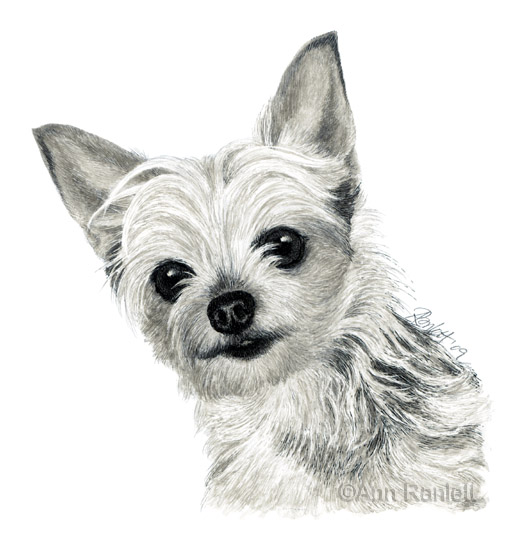 Coloring pages of yorkies best coloring pages collections for Yorkie coloring pages