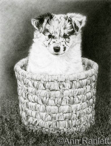 Pepper, graphite pencil by Ann Ranlett