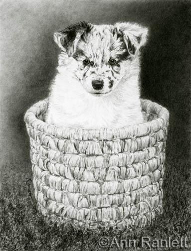 Pepper, graphite pencil by Ann Ranlett