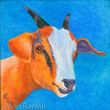 Goat #1, painting by Ann Ranlett