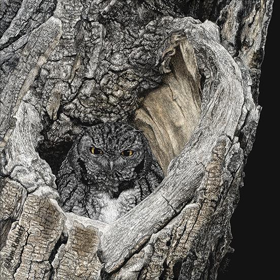 screech owl art